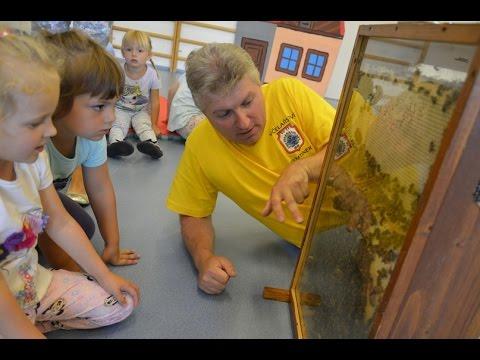 Plný úl včel v mateřské školce!
