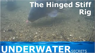 Nonton hinged stiff rig underwater view carp fishing Film Subtitle Indonesia Streaming Movie Download