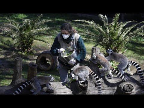 Zoos nagen am Hungertuch - drohen bald Notschlachtunge ...