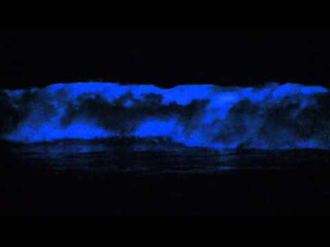 bio luminescence - On September 28th, 2011, the
