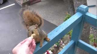 Feeding the birds and along came a squirrel - YouTube