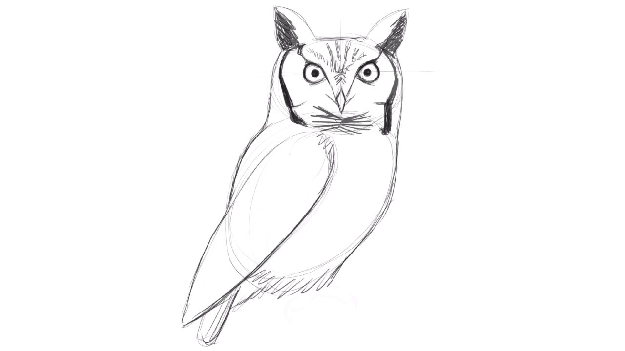 Drawing a Screech Owl with David Allen Sibley