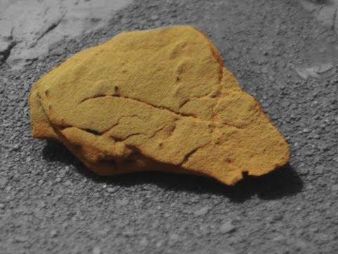 Life on MARS: Turtles, Reptile, Glyptodonts on MARS: Mars Fossils