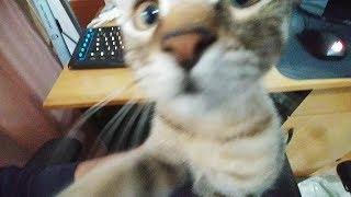 Video VLOG cu PISICA - Cum am salvat o viata. MP3, 3GP, MP4, WEBM, AVI, FLV September 2019