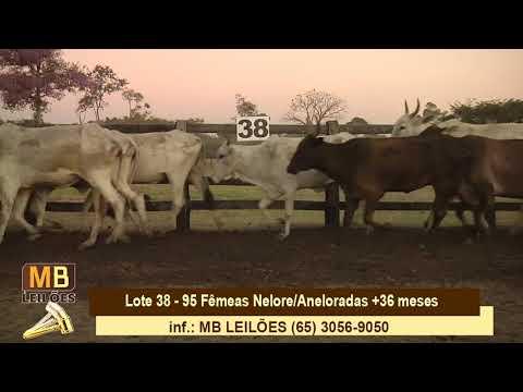 203º LEILÃO VIRTUAL MB LEILÕES