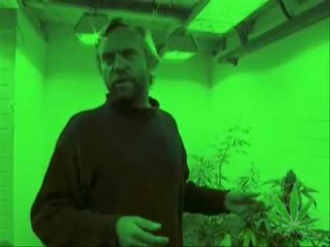 Video Ben Dronkers from Sensi Seeds & Hempflax - Hemp Is The Future! - download in MP3, 3GP, MP4, WEBM, AVI, FLV January 2017