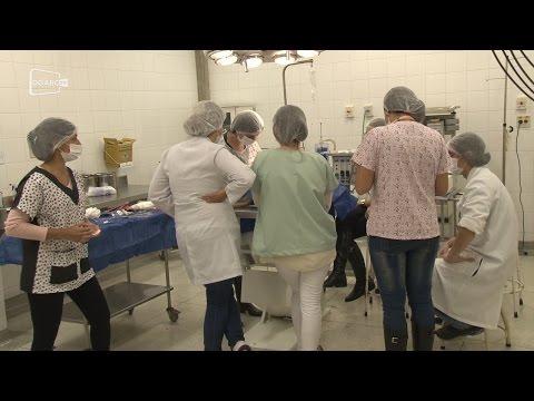 Estagiários acompanham procedimentos de Hospital Veterinário ; veja vídeo