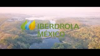 """Iberdrola México """"descarga"""" vida en un manglar mexicano"""