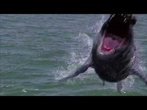 Dinoshark (2011) - Official Trailer