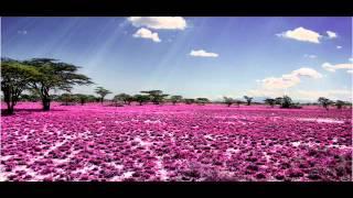 Video *Beautiful Bangla Naat Nasheed* Mufti Abdul Wadud *Paile Aponai* MP3, 3GP, MP4, WEBM, AVI, FLV Maret 2019