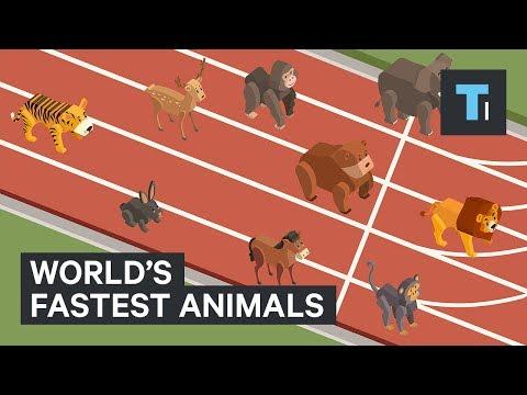 World's Fastest Animals Speed Comparison