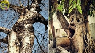 Strangely Shaped Trees From Around The WorldSubscribe : https://goo.gl/xTStKxPopular Upload : https://goo.gl/Z2gDeARecent Upload : https://goo.gl/n4RjAz#funnypicsonly======================================================Google+   https://plus.google.com/+BestoftheBestvideoFacebook https://www.facebook.com/funnypicsonlyyt/Twitter   https://twitter.com/funnypicsonlyytPinterest https://in.pinterest.com/funnypicsonlyyt/Youtube   http://www.youtube.com/c/BestoftheBestvideo======================================================Music0:00 : Music provided by FreeSongsToUse.- Track: Unvion - Wanna Be Deeper- Link: https://youtu.be/MoOFTVXkB3w→ Unvion:https://soundcloud.com/unvionhttps://www.facebook.com/unvion?fref=tshttps://www.instagram.com/unvion/https://twitter.com/Unvion======================================================Welcome to Funnypicsonly YouTube Channel,Here you will find only the best funny pictures,New Video is Posted Everyday
