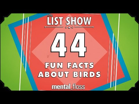 44 Fun Facts about Birds