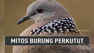 Video MITOS BURUNG PERKUTUT || On The Spot Trans 7 Terbaru 21 Desember 2017 MP3, 3GP, MP4, WEBM, AVI, FLV Februari 2018