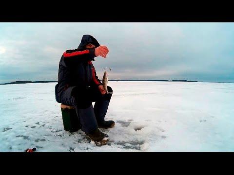 ловля окуня на иваньковском водохранилище