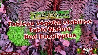 Tableau végétal stabilisé Tablo'Nature Red Eucalyptus