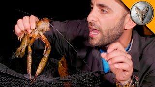Video MONSTER River Shrimp! MP3, 3GP, MP4, WEBM, AVI, FLV Agustus 2018