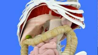 Comprendre le diaphragme