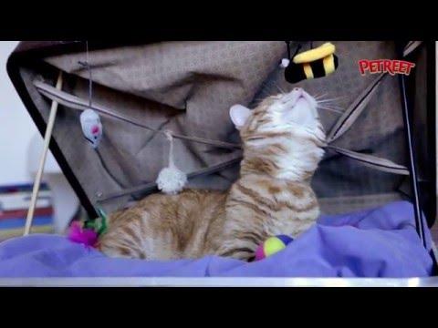 Come creare la perfetta cuccia per il tuo gatto