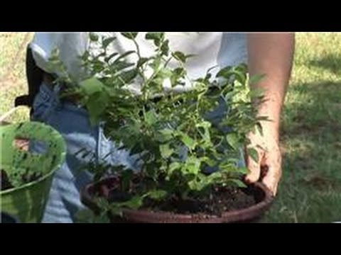 Container Gardening : How to Grow Fruits & Vegetables in Containers