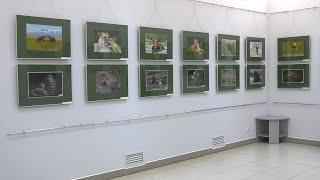 """""""Animal World"""": перша післякарантинна виставка у музеї"""