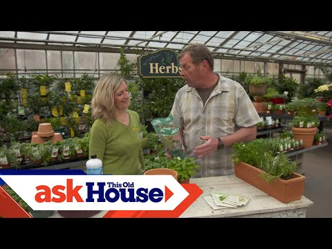 How To Grow Culinary Herbs | Ask This Old House