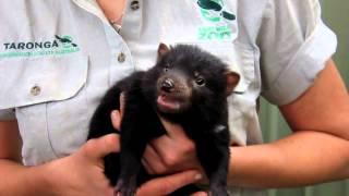 Nonton 2012 Tasmanian Devil Joeys Film Subtitle Indonesia Streaming Movie Download