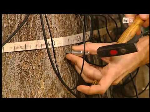 Geo&Geo, Daniele Zanzi e gli alberi monumentali