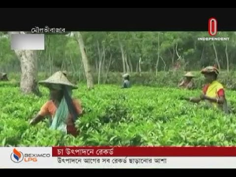 Record in tea production (15-12-2019) Courtesy: Independent TV