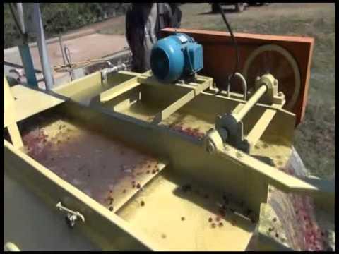 カンジラルジ KanjiLalji 農園3:コーヒーチェリーの比重選別の様子