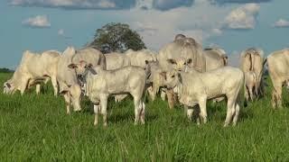 04 - Parceria Grupo Adir e Fazenda Conforto