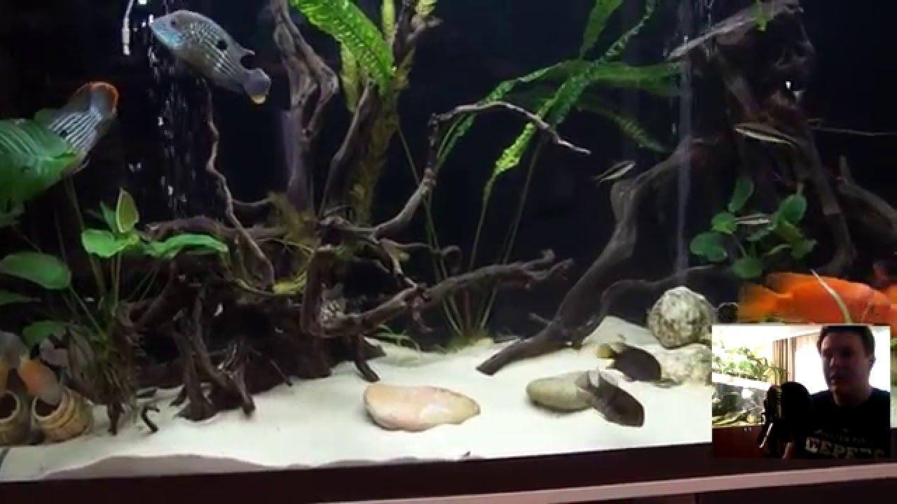 Смотреть онлайн: Интерактивный аквариумный туризм Сезон 2 Выпуск 30(Аквариум который радует глаз)