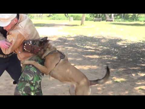 Video Hermiona K9 manof personal protection muzle protection kenya download in MP3, 3GP, MP4, WEBM, AVI, FLV January 2017