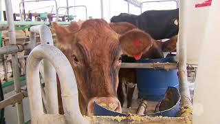 Produção de leite ganha cada vez mais excelência com a tecnologia empregada no campo