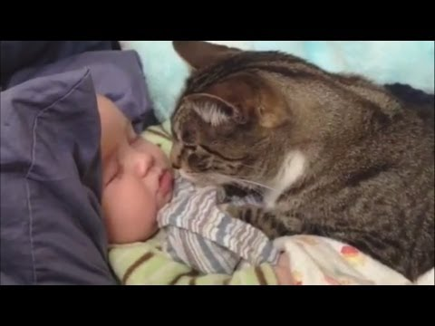 cute cats - Cats Love Babies Compilation Dogs are not the only ones who love babies, cats also know how to express their feelings towards the cute little babies... Rate,...