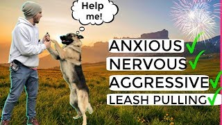 Video How to stop Dog Anxiety, Aggression, Pulling on the leash! German Shepherd Training Full tutorial MP3, 3GP, MP4, WEBM, AVI, FLV Juni 2019