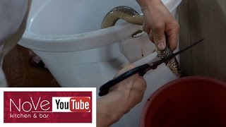 EXTREMELY GRAPHIC: Snake Meat For Dinner - Restaurant Tour Part 2 by Diaries of a Master Sushi Chef