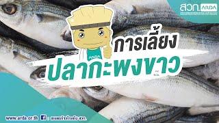 การเลี้ยงปลากะพงขาวในระบบปิด