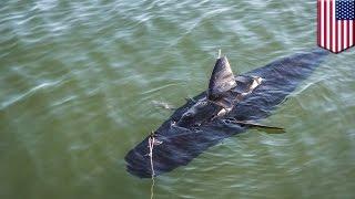 アメリカ海軍がサメ型ロボットの実験映像を公開
