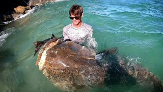 Video GIANT FISH Biggest EVER CAUGHT from LAND!! MP3, 3GP, MP4, WEBM, AVI, FLV Juni 2019
