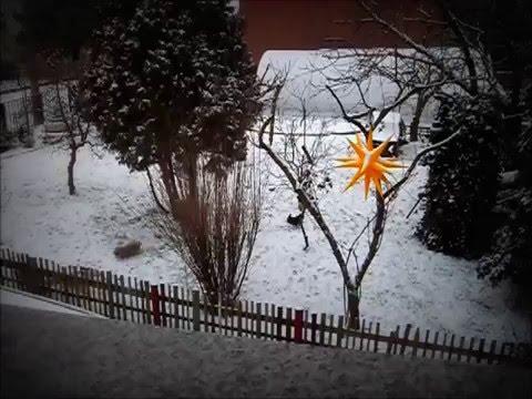 Bolonka Zwetna - Im Winter - Toben im Garten von der Wipse