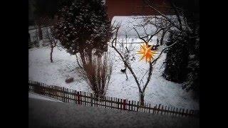 5. Bolonka Zwetna - Im Winter - Toben im Garten von der Wipse