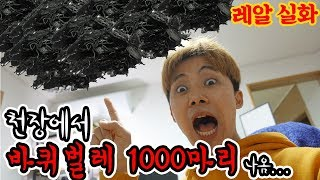Video I caught a thousand cockroaches at home. MP3, 3GP, MP4, WEBM, AVI, FLV Agustus 2018
