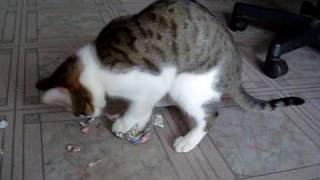 Кошка убивает газету