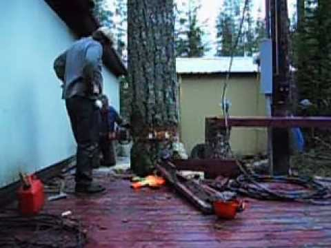 Lumberjack Pulls Off Something Amazing To Avoid Damaging Property. Amazing