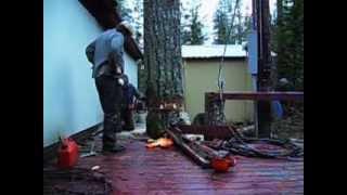 Lumberjack Pulls Off Something Amazing To Avoid Damaging Property. Incredible!