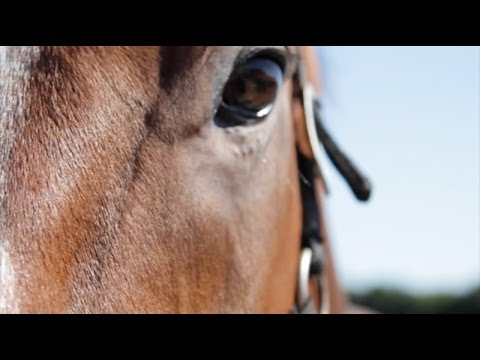 Ben Pauling Racing | Promo 2016