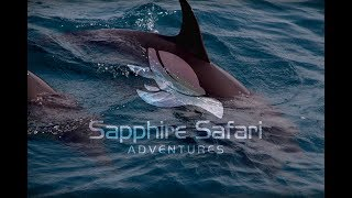 We caught the boat in the harbour to get some close encounters with loads of dolphins, in the bay of gibraltar! Check out the video ...
