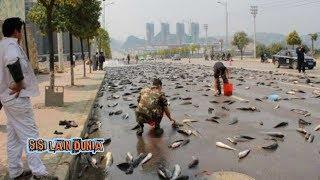 Video Ribuan Ikan LELE tiba-tiba Muncul di jalan Cikarang, Jatuh dari langit ? MP3, 3GP, MP4, WEBM, AVI, FLV Desember 2018
