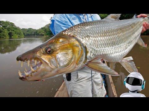 10 самых опасных рыб убийц